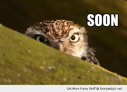 soon angry owl bird animal funny pics pictures pic picture image photo images photos lol