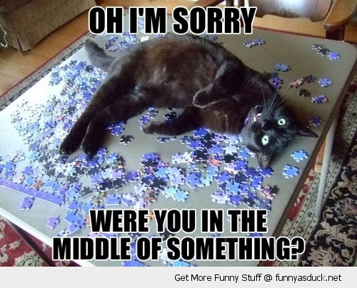 sorry cat lolcat animal middle something jigsaw lying funny pics pictures pic picture image photo images photos lol