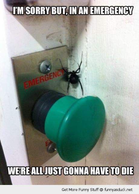 spider insect emergency button sorry just need to die funny pics pictures pic picture image photo images photos lol