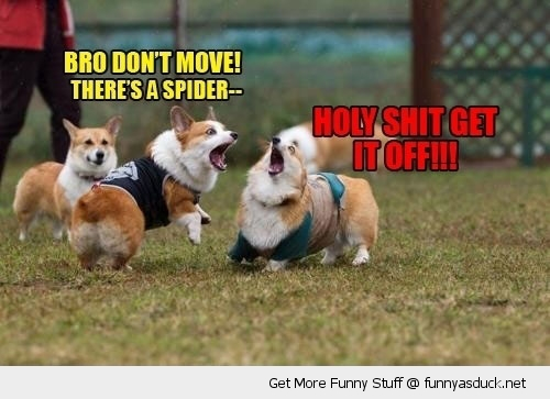 spider on back dog animal shit scared corgi funny pics pictures pic picture image photo images photos lol
