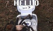 hello this is spider insect mobile phone tarantula insect funny pics pictures pic picture image photo images photos lol