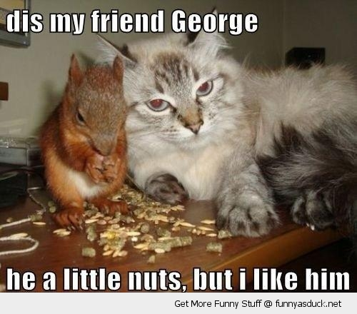 my fried george squirrel eating nuts cat lolcat animal funny pics pictures pic picture image photo images photos lol
