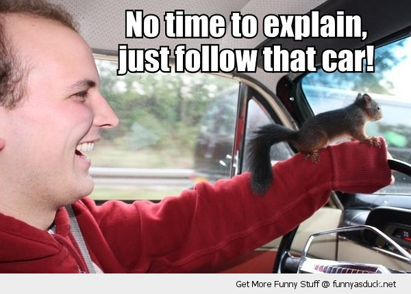 no time to explain squirrel man driving follow that car animal funny pics pictures pic picture image photo images photos lol