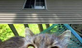 soon squirrel on roof cat lolcat animal looking funny pics pictures pic picture image photo images photos lol