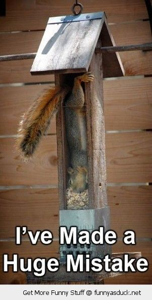 squirrel animal stuck bird house nuts made terrible mistake funny pics pictures pic picture image photo images photos lol