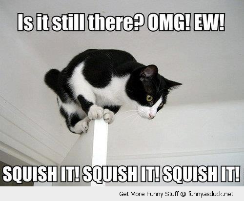 omg scared cat lolcat top door squish it animal funny pics pictures pic picture image photo images photos lol