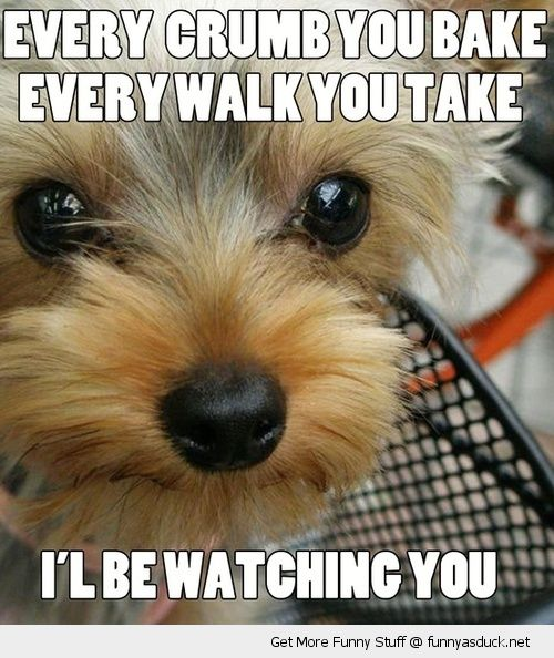 stalker scary dog animal crumb bake step take watching you funny pics pictures pic picture image photo images photos lol