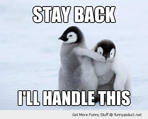 stay back cute baby penguins animals funny pics pictures pic picture image photo images photos lol