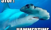 stop hammertime hammer head shark animal fish ocean funny pics pictures pic picture image photo images photos lol