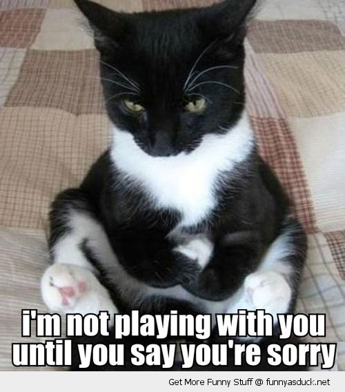 not playing till you say sorry angry huff sulking cat lolcat animal funny pics pictures pic picture image photo images photos lol