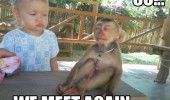 we meet again suspicious monkey kid baby animal funny pics pictures pic picture image photo images photos lol