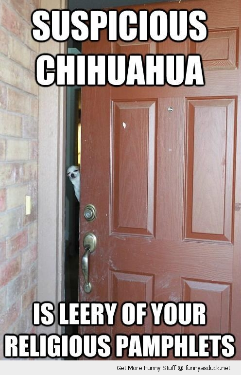 suspicious chihuahua dog answering door leery religious pamphlets animal funny pics pictures pic picture image photo images photos lol