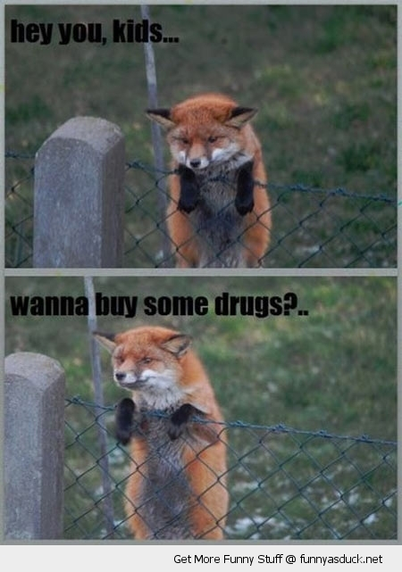 hey kids suspicious fox hanging fence wanna buy drugs animal funny pics pictures pic picture image photo images photos lol