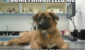 skeptical dog animal vet thermometer not mouth table funny pics pictures pic picture image photo images photos lol