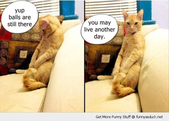 cat lolcat animal balls still there live another day funny pics pictures pic picture image photo images photos lol