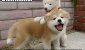 cute puppys dogs animals massage right there funny pics pictures pic picture image photo images photos lol