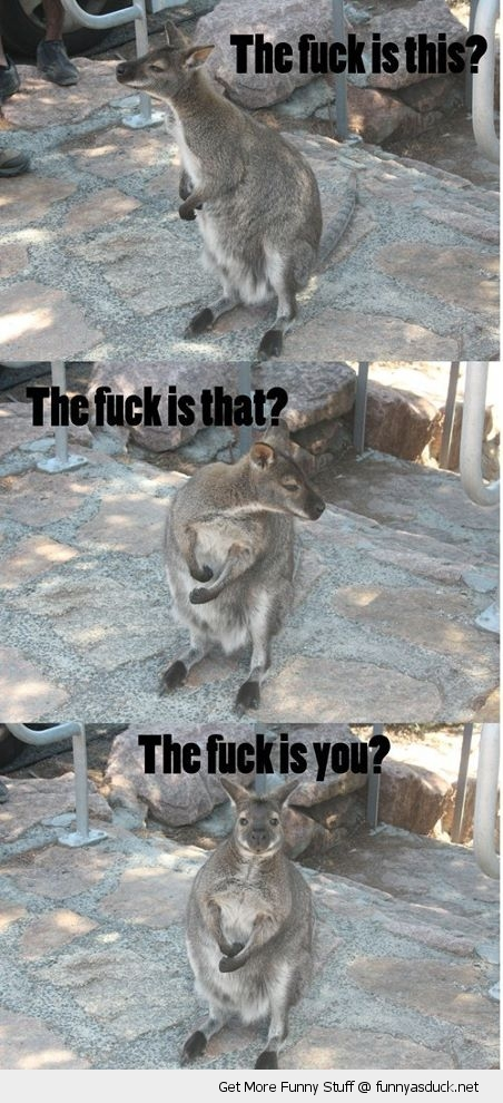 the fuck confused kangaroo animal funny pics pictures pic picture image photo images photos lol