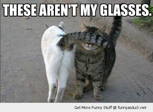 these aren't my glasses cat tail face animal funny pics pictures pic picture image photo images photos lol