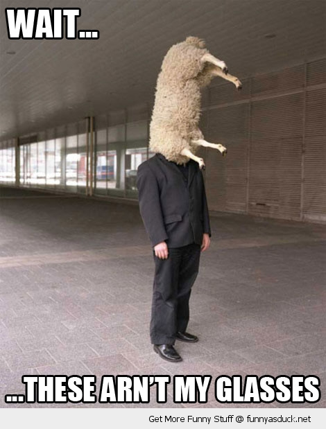 man sheep on head these are'nt my glasses funny pics pictures pic picture image photo images photos lol