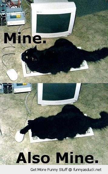 mine cat computer pc keyboard mouse sitting animal lolcat funny pics pictures pic picture image photo images photos lol