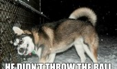 dumb dog husky animal didn't throw ball funny pics pictures pic picture image photo images photos lol