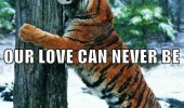 love can never be tiger hugging tree animal forest snow funny pics pictures pic picture image photo images photos lol