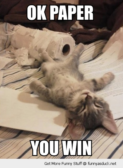 tired cat kitten lolcat toilet paper ripped win this time animal funny pics pictures pic picture image photo images photos lol