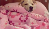 5 five more minutes tired sleepy dog in bed animal funny pics pictures pic picture image photo images photos lol