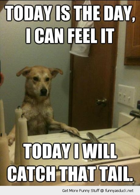 today i will catch the tail dog animal mirror funny pics pictures pic picture image photo images photos lol