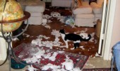 toilet paper mess room dog cat animal lolcat settled differences funny pics pictures pic picture image photo images photos lol