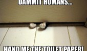 dammit humans paws under door cat toilet paper lolcat animal funny pics pictures pic picture image photo images photos lol