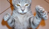 cat lolcat animal claws touchy feely scratchy bleedy standing funny pics pictures pic picture image photo images photos lol