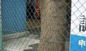 om nom tree eating fence forest wood eyes funny pics pictures pic picture image photo images photos lol