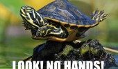 look no hands turtle balancing rock animal funny pics pictures pic picture image photo images photos lol
