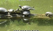 bitch i'm fabulous turtle on top balancing animal river wood funny pics pictures pic picture image photo images photos lol