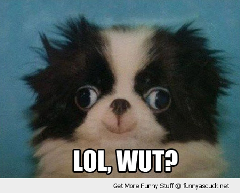 wut ugly cute dumb dog animal me gusta face funny pics pictures pic picture image photo images photos lol