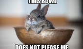 unhappy rabbit bowl bunny angry animal funny pics pictures pic picture image photo images photos lol