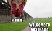 hi there chicken upside down welcome Australia animal bird funny pics pictures pic picture image photo images photos lol