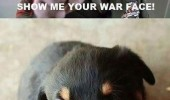 war face army man full metal jacket cute puppy growling animal grrr funny pics pictures pic picture image photo images photos lol