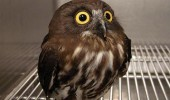 wat what shocked surprised owl bird animal funny pics pictures pic picture image photo images photos lol
