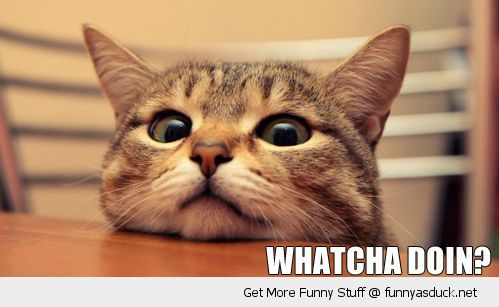 watcha doing cat lolcat animal bored face head table funny pics pictures pic picture image photo images photos lol