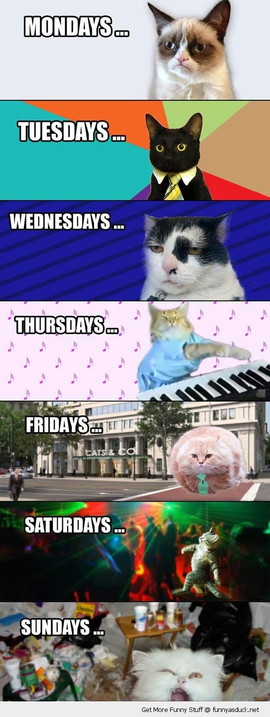 the week explained according to cats meme lolcats animals funny pics pictures pic picture image photo images photos lol