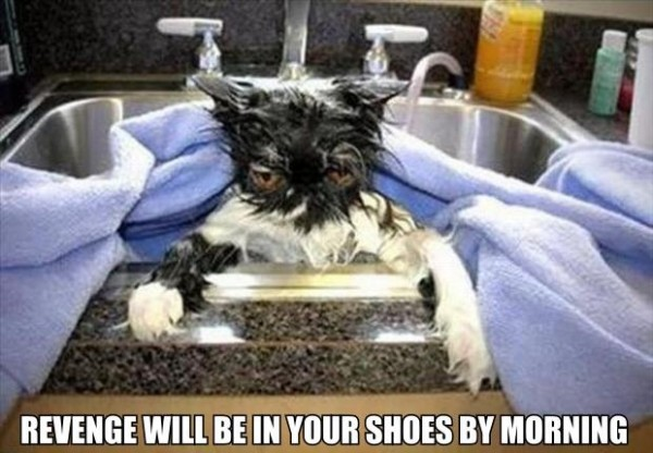 wet cat pussy kitten animal sink bath angry grumpy revenge shoes morning funny pics pictures pic picture image photo images photos lol
