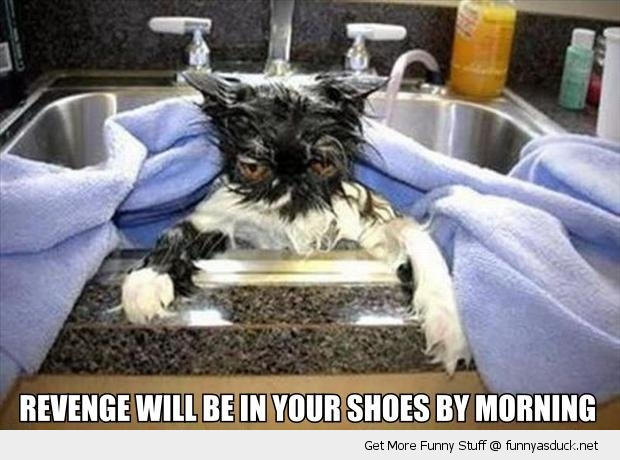 Revenge Will Be In Your Shoes