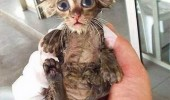 dobby cat kitten wet pussy animal harry potter hogwarts return never funny pics pictures pic picture image photo images photos lol