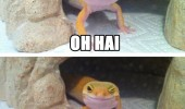 hi hai happy smiling winking lizard how you doin joey friends animal funny pics pictures pic picture image photo images photos lol