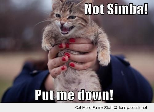 angry cat kitten lolcat animal lion king disney not simba put me down woman holding funny pics pictures pic picture image photo images photos lol