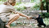 hi I'm jane nice to meet you chimp monkey animal shaking hands funny pics pictures pic picture image photo images photos lol