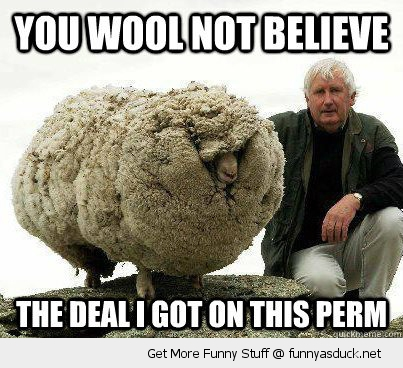 wool not believe perm sheep animal pun joke funny pics pictures pic picture image photo images photos lol