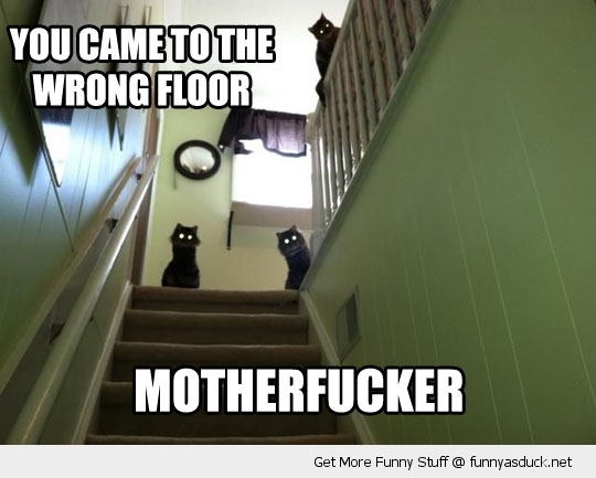 wrong floor cats lolcats evil animals funny pics pictures pic picture image photo images photos lol